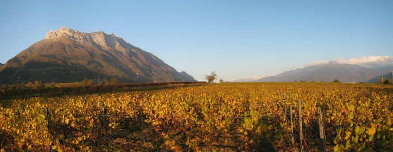 Vignoble Savoie